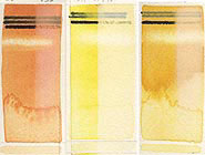 handprint : colormaking attributes